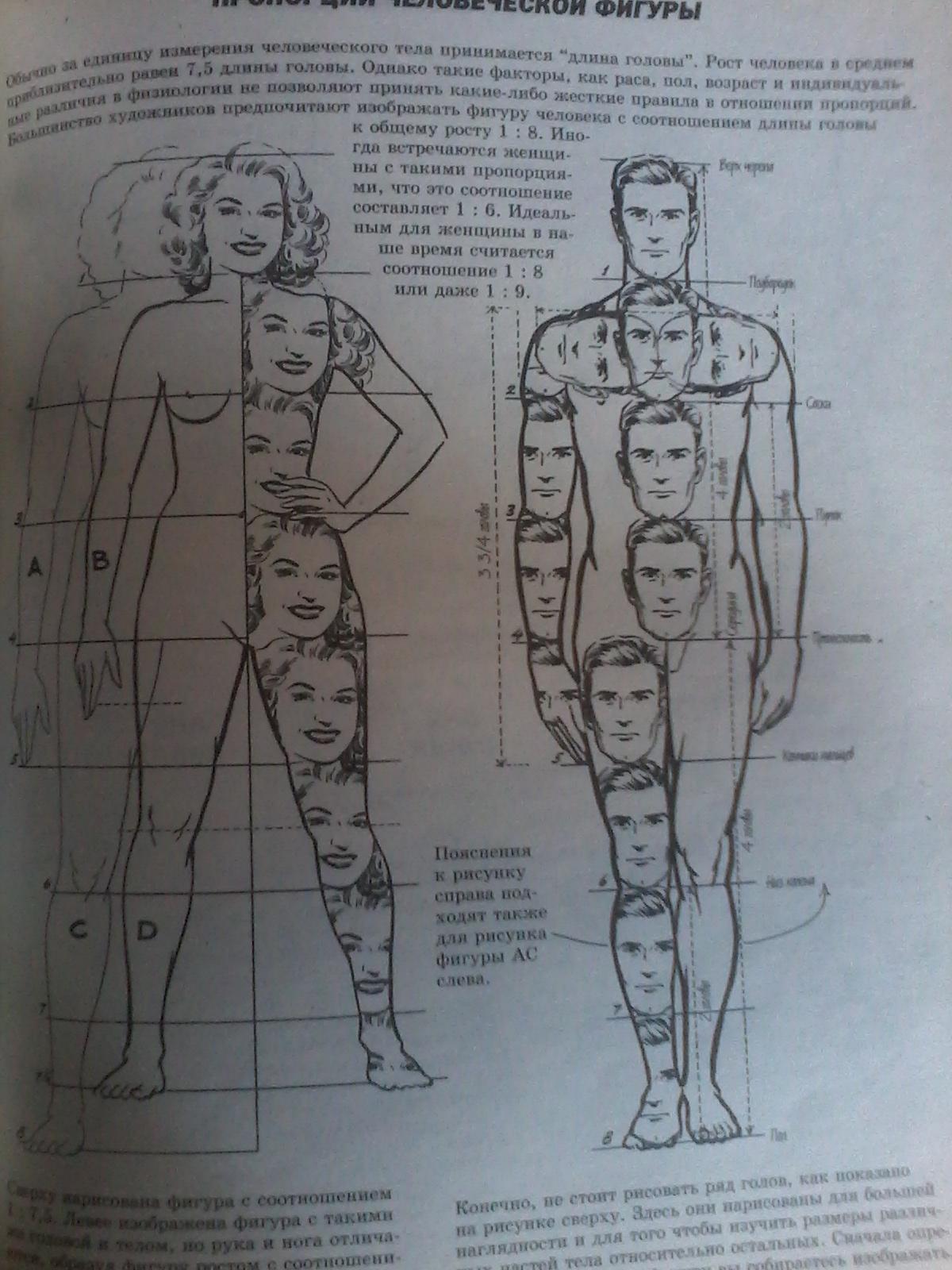 Девушки изучают анатомию мужчины фото