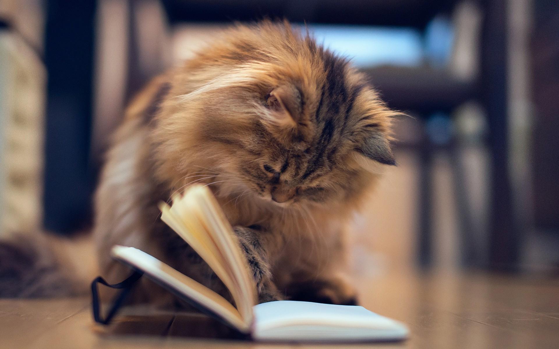 кошка читает статьи на petstory
