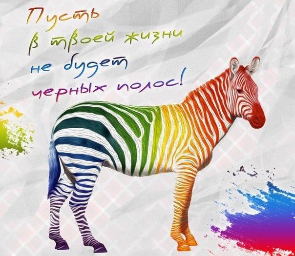 поздравления про зебру этот раз